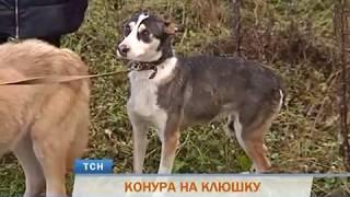 В Перми со скандалом закрылся приют для бойцовых собак