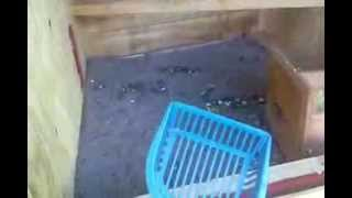 How To Make A Kitty Litter Pooper Scoopr For A Chicken Coop