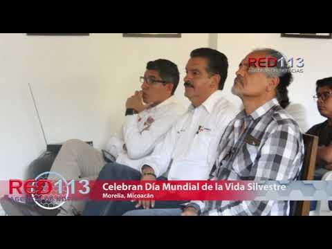 VIDEO Celebra Michoacán Día Mundial de la Vida Silvestre, desde el Zoológico de Morelia
