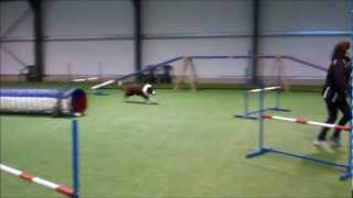 Manny agility training Jan2013 Thumbnail
