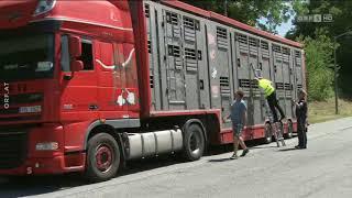 Kontrollen von Tiertransporten ORF Salzburg heute