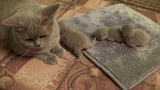 Котята - первый и второй день жизни