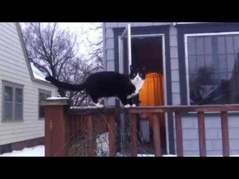 Elvy and Fargo, College Hill, KS, Winter, 2011(?)