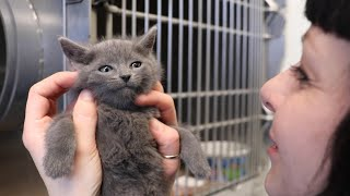 Fostering in Quarantine: Animal Shelters Feverishly Free Up Space During COVID-19 Crisis