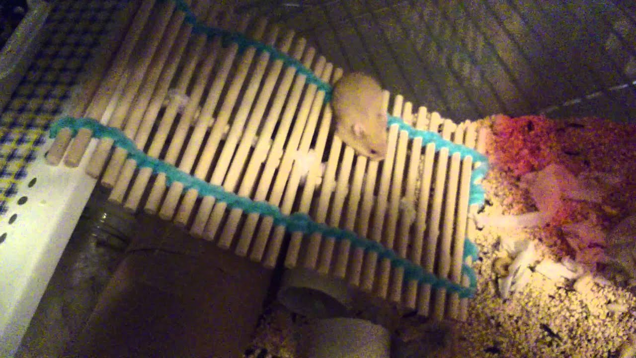 Hamster cage diy shelf and ramp 01 17 15 12 54 youtube for How to build a hamster cage