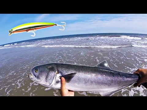 Non-Stop Bluefish On Plugs // New Jersey // Catch And Cook