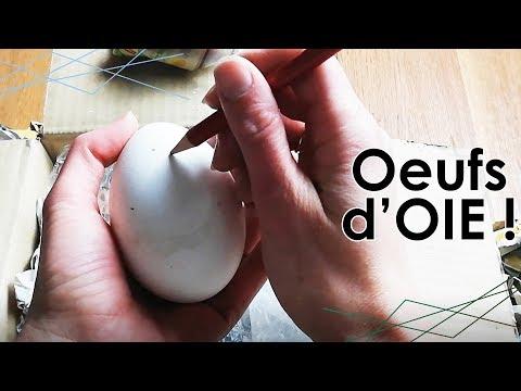 UNBOXING : OEUFS d'OIE pour INCUBATION ARTIFICIELLE !
