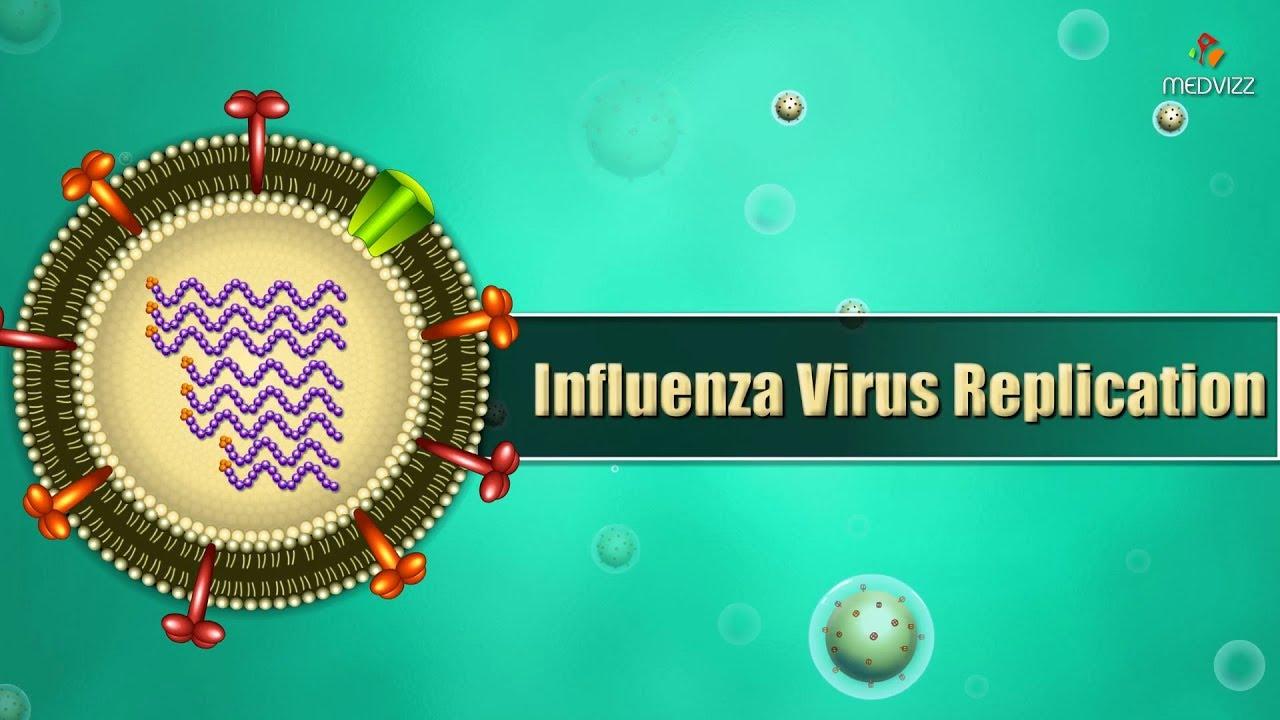 fogyjon influenza alatt fogyás definíció spanyol