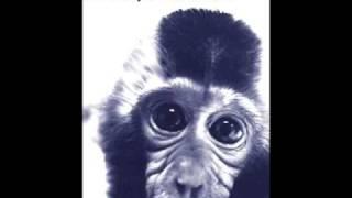 Mob 47 - Animal Liberation