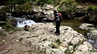 愛犬と赤目48滝をオオサンショウウオを探しながらハイキング。