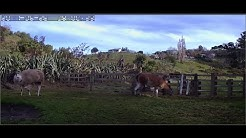 Alpaca Cam 「みんなの馬」
