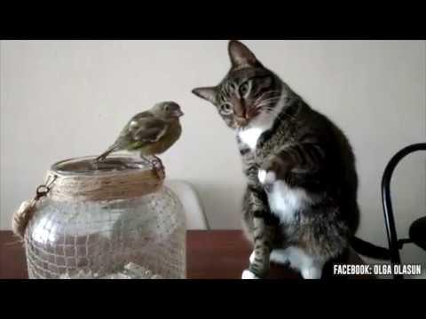 La excelente y extraña relación entre un gato y un pájaro