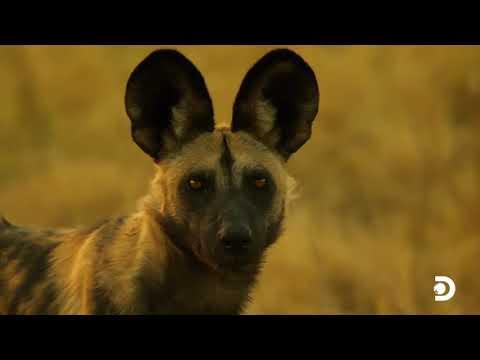 Serengeti! Natural Wildlife Ecosystem found only in Tanzania