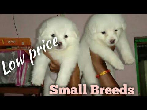 Dogs For Sale In Guwahati Assam