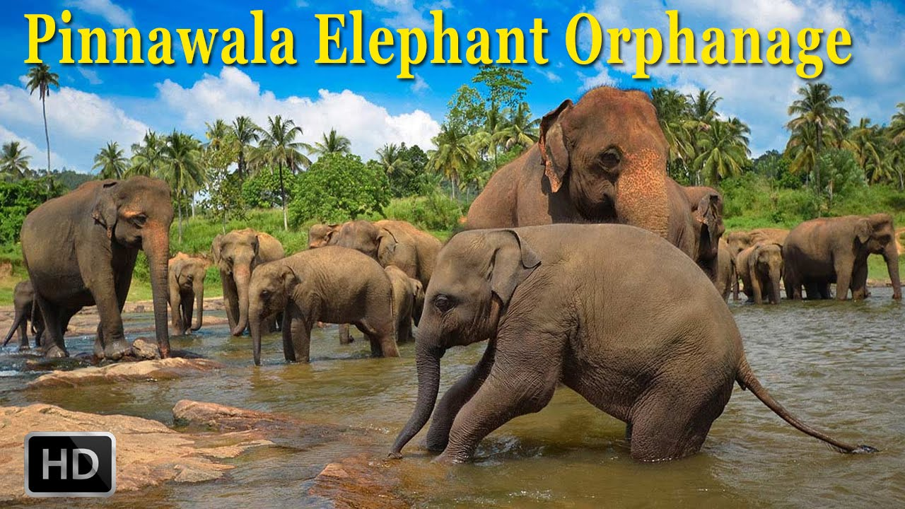 Image result for pinnawala elephant orphanage sri lanka