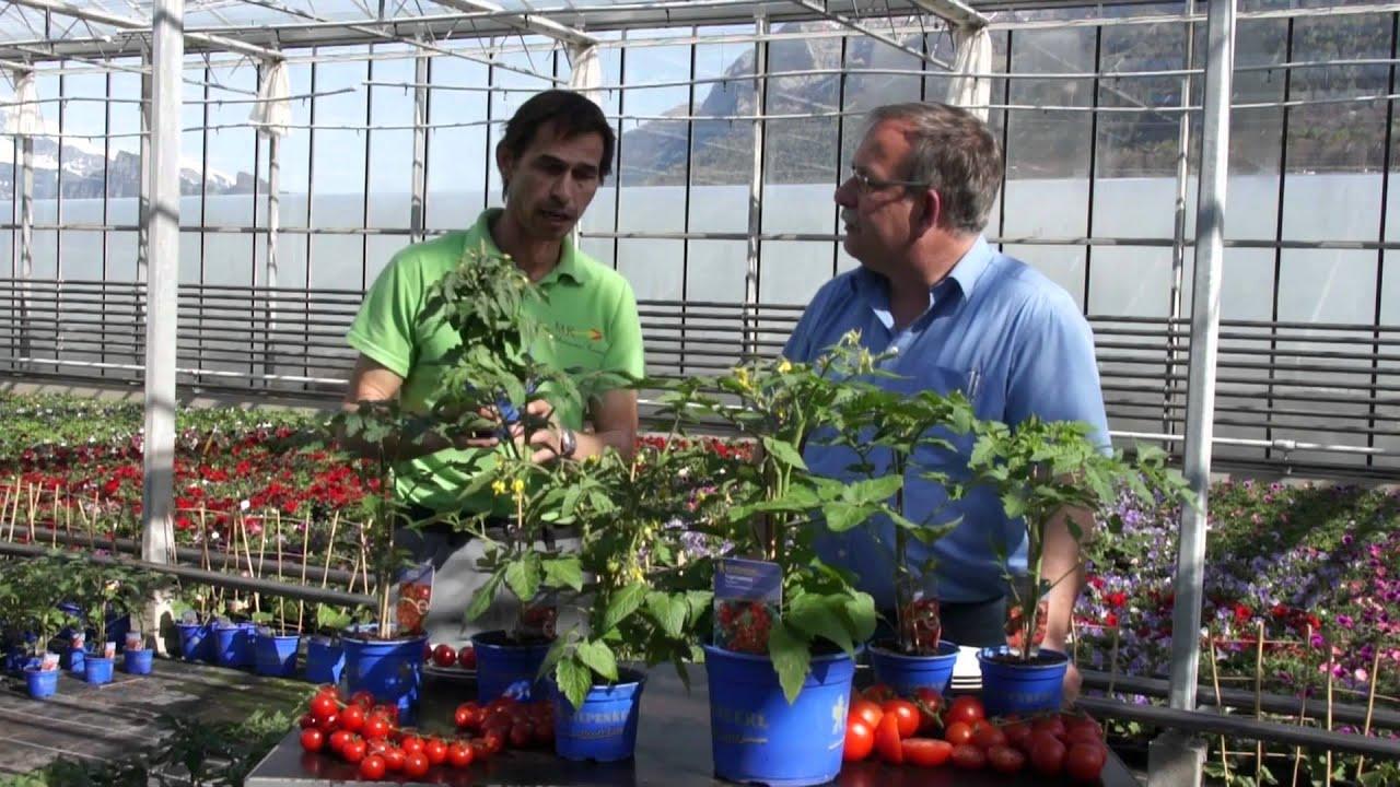 Tipps Zu Gemüse Und Tomaten Für Terrasse Und Balkon - Youtube Tomaten Balkon Pflanzen Tipps