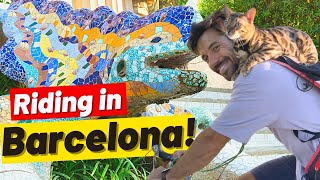 I Spent 2 Hours Riding a Bike With My Cat Doing Errands