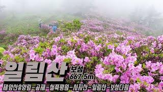 우중산행, 철쭉의 일림산