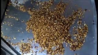 Станок для очистки кедрового ореха от скорлупы