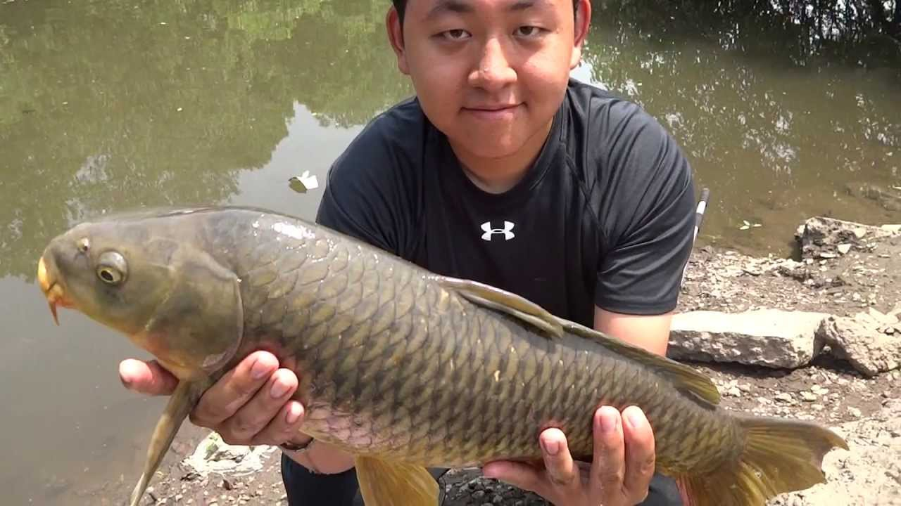 Carp fishing common carp at frankford creek for Extreme philly fishing
