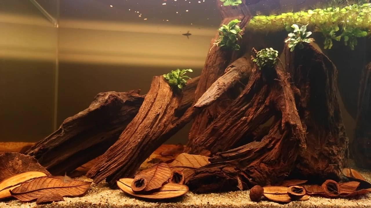 Aquascaping With Botanicals From Tannin Aquatics Youtube Ziolite Aquarium Dan Aquascape Premium