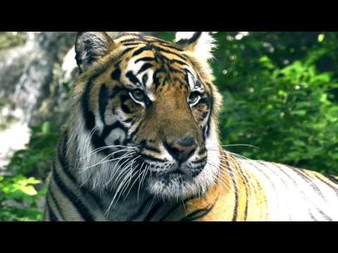Fort Wayne Children's Zoo Visit 7/30/17 - Panasonic UX90 4K