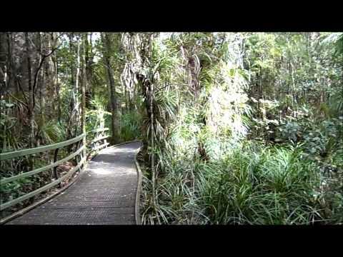 Our Walk Thru The Puketi Kauri Forest