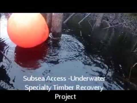 Timber Survey - Subsea Access