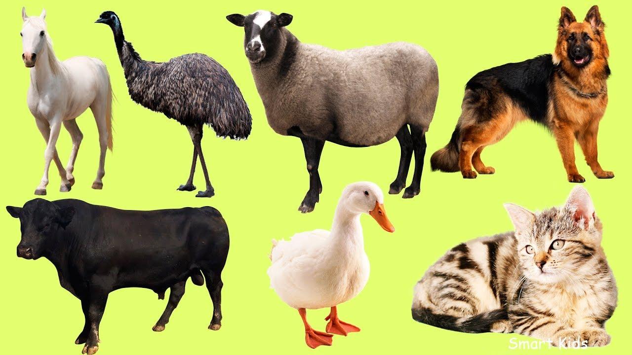 Animales De La Granja Para Niños Aprende Los Animales Y Sonidos De Animales Para Bebes En Español Youtube