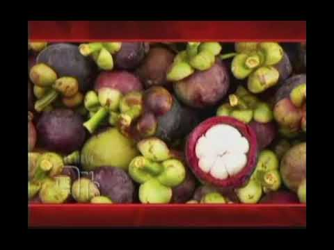 XANGO Mangosteen Juice Review On The Drs