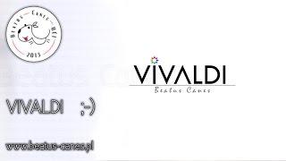 Vivaldi ;-) Podróż po nowego pieska :)
