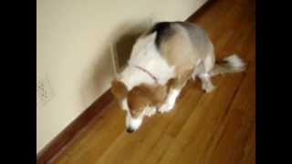 PART 1: Self Punishing Bad Guilty Dog, LeeLoo - Cute!