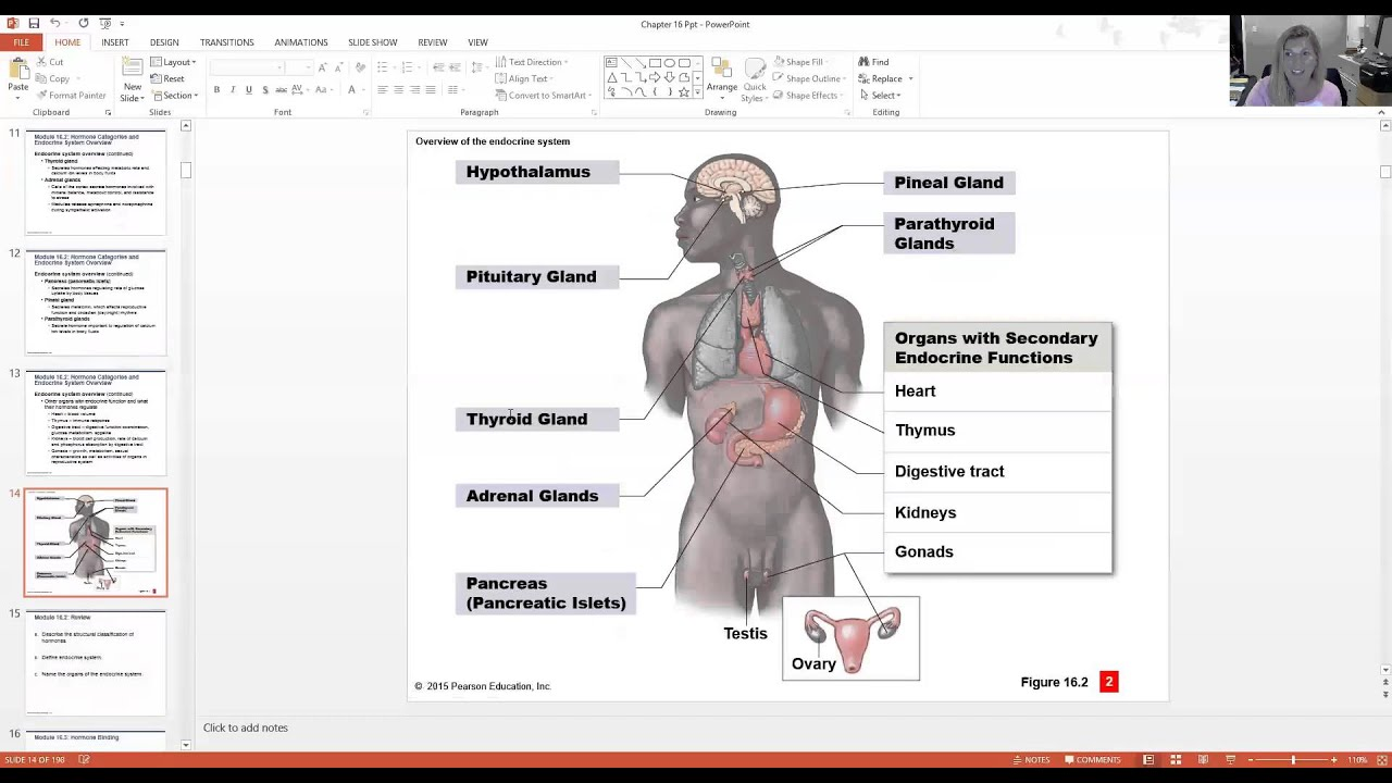 Endocrine System - YouTube