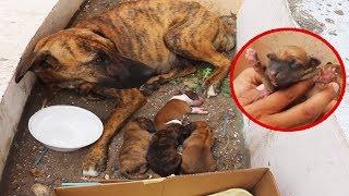 BOTAN a mama con cachorros RECIÉN NACIDOS en una feria, TE SORPRENDERÁ COMO LOS PROTEGÍA