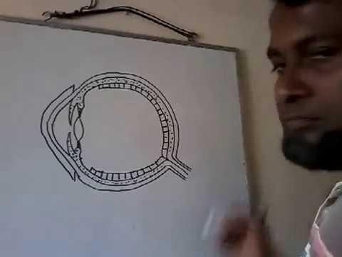 Easy Drawing Of Human Eye Youtube