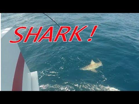 SHARK! -  Canaveral Princess, Cape Canaveral, Florida