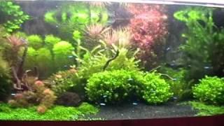 960 liter natur aquarium