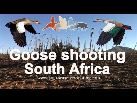Goose shooting South Africa £175 per day season 2018