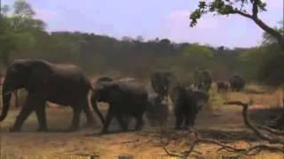 Play Elephant King