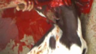 Goat Slaughtering