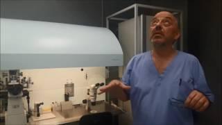 видео Транспортировка ооцитов и эмбрионов