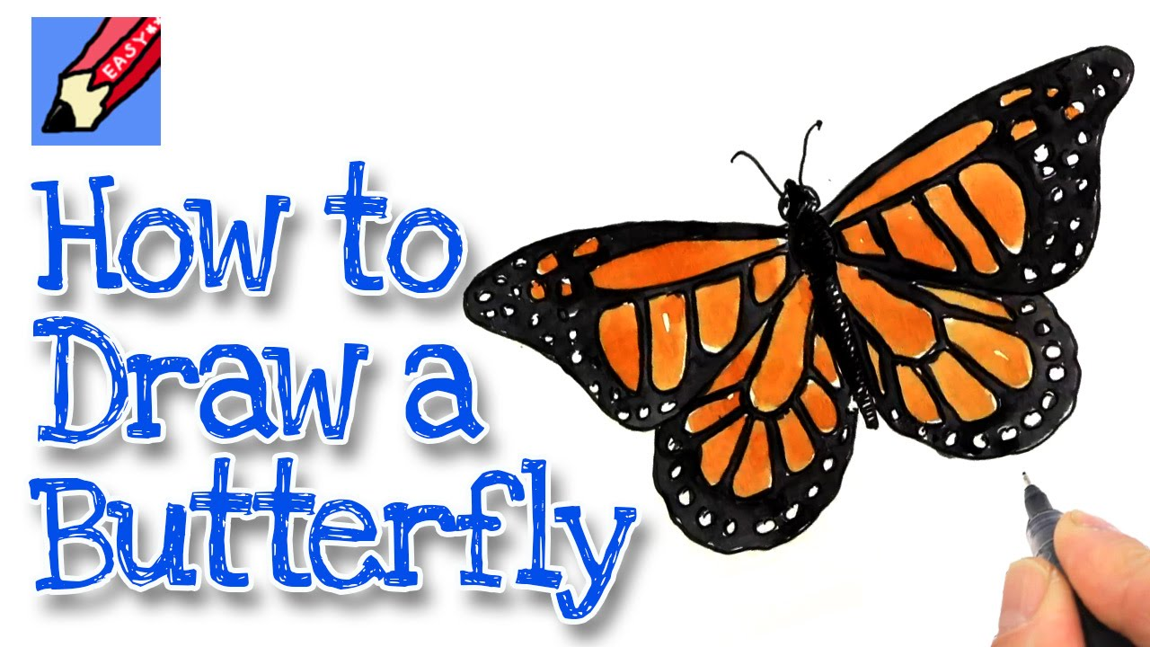 Uncategorized How To Draw A Easy Butterfly how to draw a monarch butterfly real easy youtube