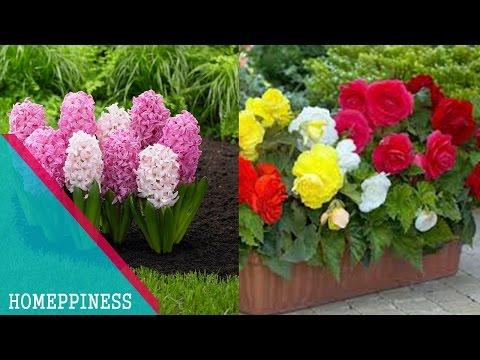 MUST WATCH !!! Top 10 Flowers For Balcony Garden