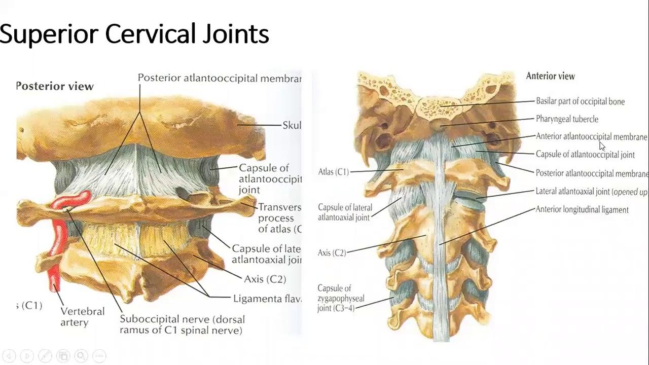 inflamația ureaplasmozei articulare