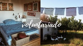 VOLUNTARIADO | Los animales, Room Tour y el Santuario
