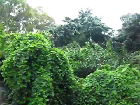 A drive through the Campus of Instituto Superior de Agronomia