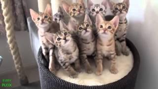 Котяра, кошка, котик, cat, cat, kitten, милые котята