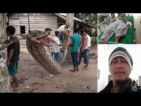 Man wins fight to the death with 25ft python he encountered on way home from work