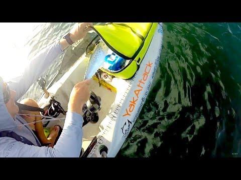 Spanish Mackerel Fishing - Pensacola Bay Florida