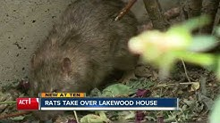 Rat-infested House